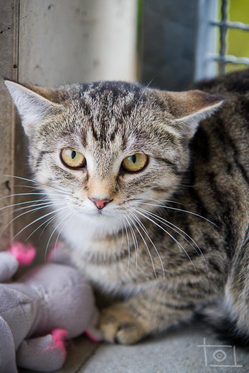 wild lebende katzen geh ren nicht ins tierheim tierheim cappel marburg. Black Bedroom Furniture Sets. Home Design Ideas