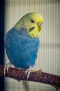 Jacky (3)