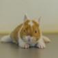 Kaninchenbaby (15)