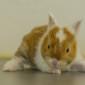 Kaninchenbaby (16)
