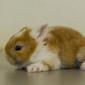 Kaninchenbaby (17)