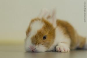 Kaninchenbaby (23)