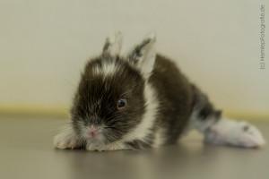 Kaninchenbaby (27)
