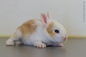 Kaninchenbaby (6)