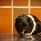Snoopy (8)