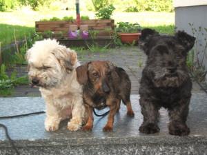 Zottel, Klara, Max 001