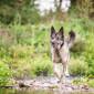Sam_Hund_Schaeferhund_Tierheim_Cappel_Marburg (3)