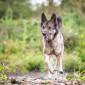 Sam_Hund_Schaeferhund_Tierheim_Cappel_Marburg (4)