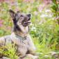 Sam_Hund_Schaeferhund_Tierheim_Cappel_Marburg (8)