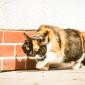 Kitty (5)