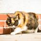 Kitty (6)