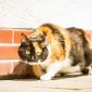 Kitty (8)