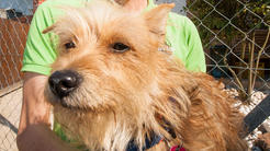Tierheim-Geschäftsführer Robert Neureuther kümmert sich privat um den zehn Monate alten Hund Alfred.