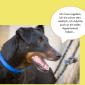2014-09-23 22_00_29-Unsere Hunde helfen fleißig mit powerpoint (2).pptx [Schreibgeschützt] - Microso