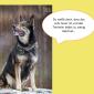 2014-09-23 22_00_42-Unsere Hunde helfen fleißig mit powerpoint (2).pptx [Schreibgeschützt] - Microso