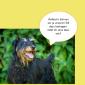 2014-09-23 22_01_04-Unsere Hunde helfen fleißig mit powerpoint (2).pptx [Schreibgeschützt] - Microso