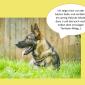 2014-09-23 22_01_17-Unsere Hunde helfen fleißig mit powerpoint (2).pptx [Schreibgeschützt] - Microso