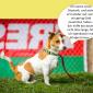 2014-09-23 22_01_34-Unsere Hunde helfen fleißig mit powerpoint (2).pptx [Schreibgeschützt] - Microso