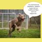 2014-09-23 22_03_48-Unsere Hunde helfen fleißig mit powerpoint (2).pptx [Schreibgeschützt] - Microso
