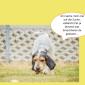 2014-09-23 22_03_58-Unsere Hunde helfen fleißig mit powerpoint (2).pptx [Schreibgeschützt] - Microso