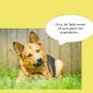 2014-09-23 22_04_17-Unsere Hunde helfen fleißig mit powerpoint (2).pptx [Schreibgeschützt] - Microso
