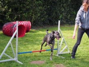 Hunde und ihre Besitzer nahmen beim Tierheimfest mit großer Freude am Agility-Test teil.  Fotos: Lisa Rösser