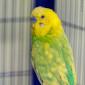 Kiwi (2)