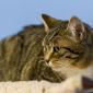 Cleo (3)