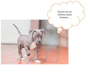 2014-12-30 19_29_24-weihnachtswunsch.pptx [Geschützte Ansicht] - Microsoft PowerPoint