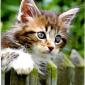 2015-03-06 14_25_47-Danke.PDF - Adobe Reader