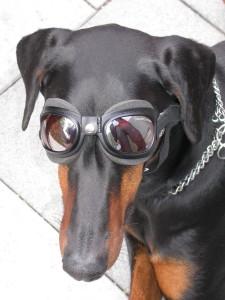 Brillenhund__Foto_Rainer_Kieselbach