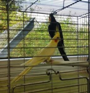 Vögel ausgesetzt 114.08.15