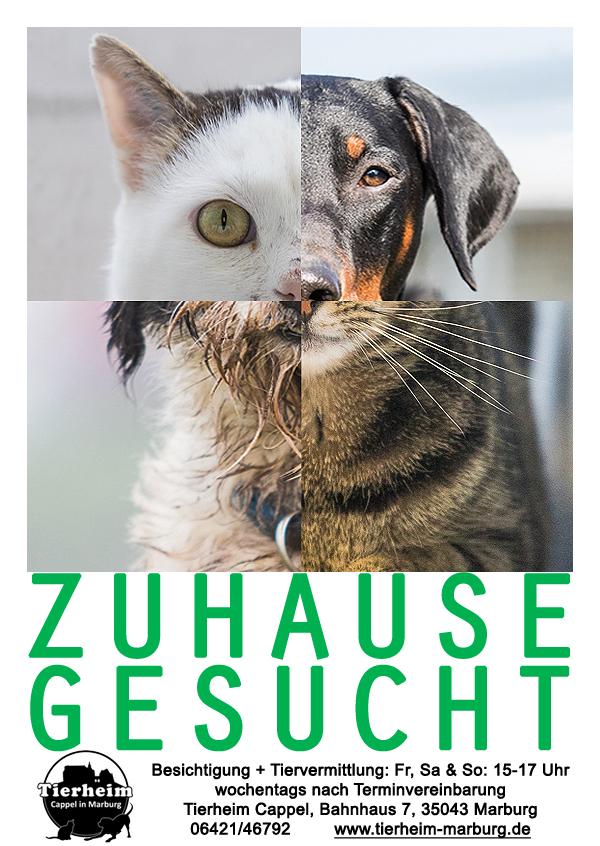 Zuhause-Gesucht_Tierheim_Cappel_Marburg