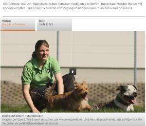 zdf.terra-xpress_hunde-und-andere-stoerenfriede