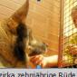 2015-08-22 15_53_50-Hinterlaender_Anzeiger_20.8.2015_Jeder_Euro_fuers_neue_Hundehaus_-_Sommerfest_20
