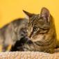 Punto_Katze_Kitten_Tierheim_Cappel_Marburg (1)