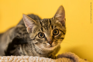 Punto_Katze_Kitten_Tierheim_Cappel_Marburg (3)