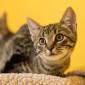 Punto_Katze_Kitten_Tierheim_Cappel_Marburg (4)