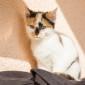 Padme-und-Amidala_Katzen_Tierheim_Cappel_Marburg_Kitten_Katzenwelpen (1)