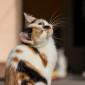 Padme-und-Amidala_Katzen_Tierheim_Cappel_Marburg_Kitten_Katzenwelpen (2)