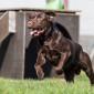 Schlappi_Labrador_Hund_Tierheim_Cappel_Marburg (11)