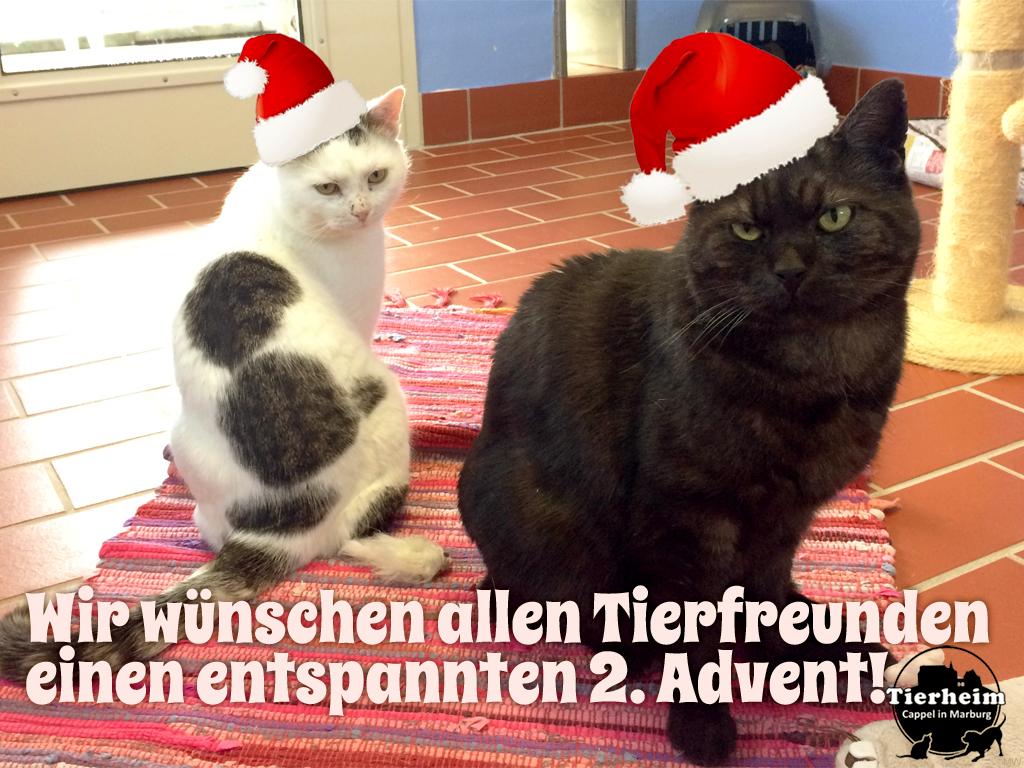 2 Advent Tiere