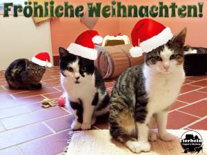 weihnachtskatzen