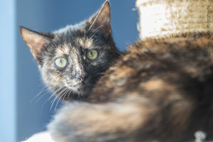 Betty_Katze_EKH_Tierheim_Cappel_Marburg (1)