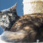 Betty_Katze_EKH_Tierheim_Cappel_Marburg (2)
