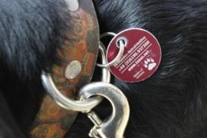 Hund mit Tasso-Plakette, Foto TASSO