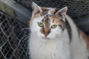 Katze Hanna, Foto Hemlep