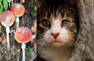 Pilz-Katze, Fotos Hemlep, Kieselbach