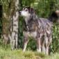 Scharo_Hund_Mischling_Tierheim_Cappel_Marburg (11)
