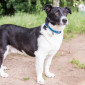 Sandro_Border_Collie_Mix_Hund_Tierheim_Cappel_Marburg (1)
